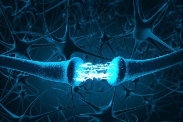 CB1 receptor, dendrite, axon, nervous system, nerves, CNS, endocannabinoids, MS, neurodegenerative disease