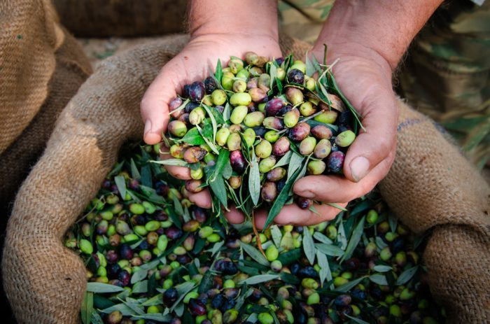 olives, olive oil, healthy fats, cannabis, cannabis-infused, stuffed olives, fish, Mediterranean diet, healthy diet