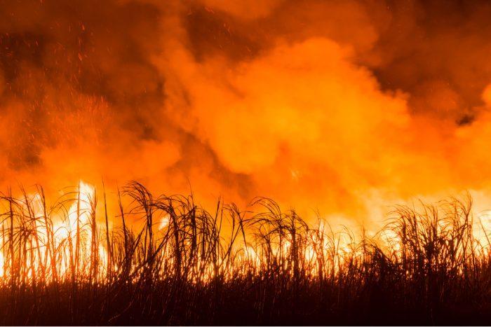 fields of hemp on fire