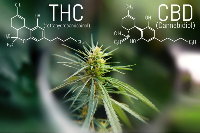 can CBD make you high