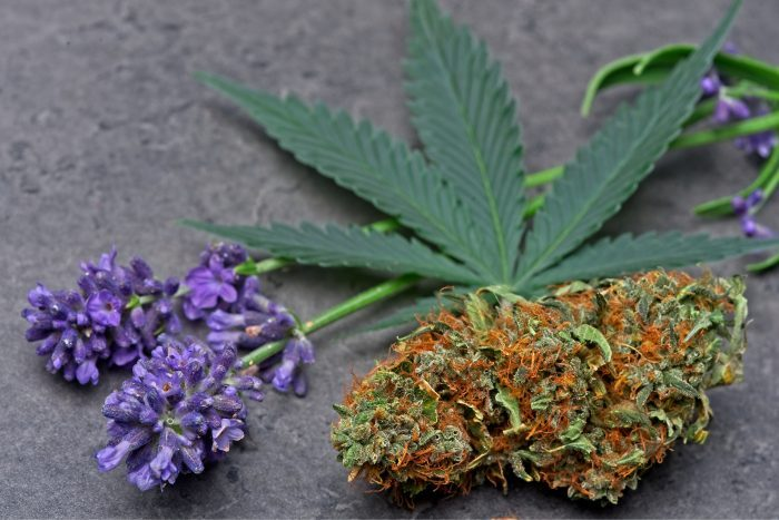 cannabis bud next to purple flower