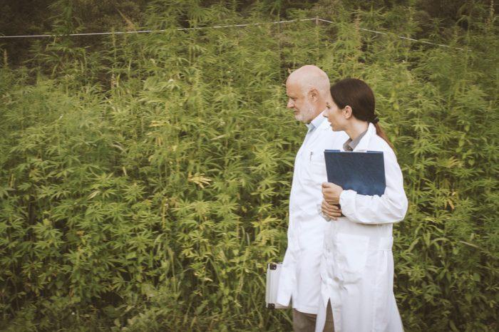 scientists walking in field of cannabis