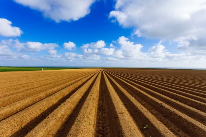 no til cannabis in empty field
