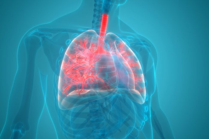 the respiratory system, which vape oil can damage