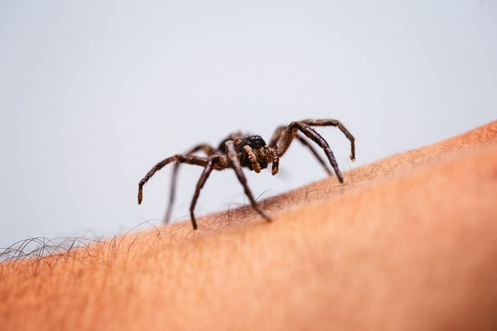 a spider, which might make you need some fear extinction