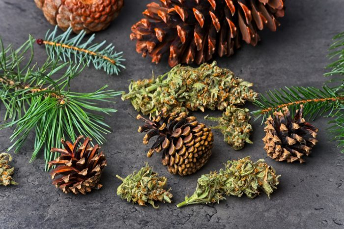 pinene, common in blue weed