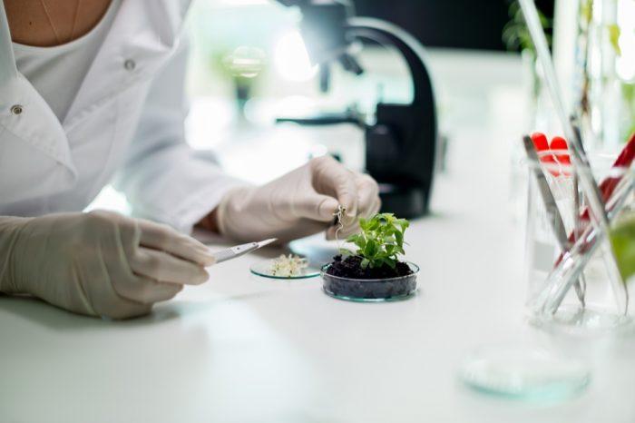 cannabis pharmacist tending plants