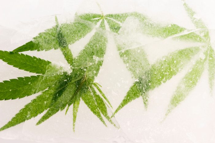 freezing cannabis like this for storage might be the best way