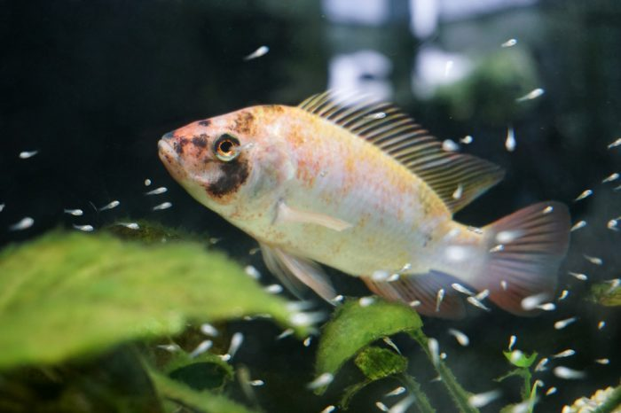 hydroponic systems wouldn't have a fish like this in it. this is aquaponics
