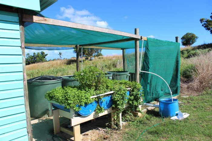 hydroponic systems wouldn't have fish like this. This is an outdoor aquaponics system, diy