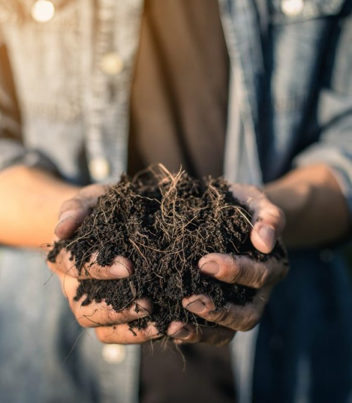How To Cultivate Living Soil For Quality Grows
