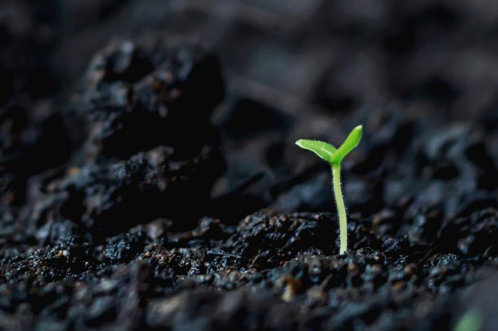 plant breaking through ground