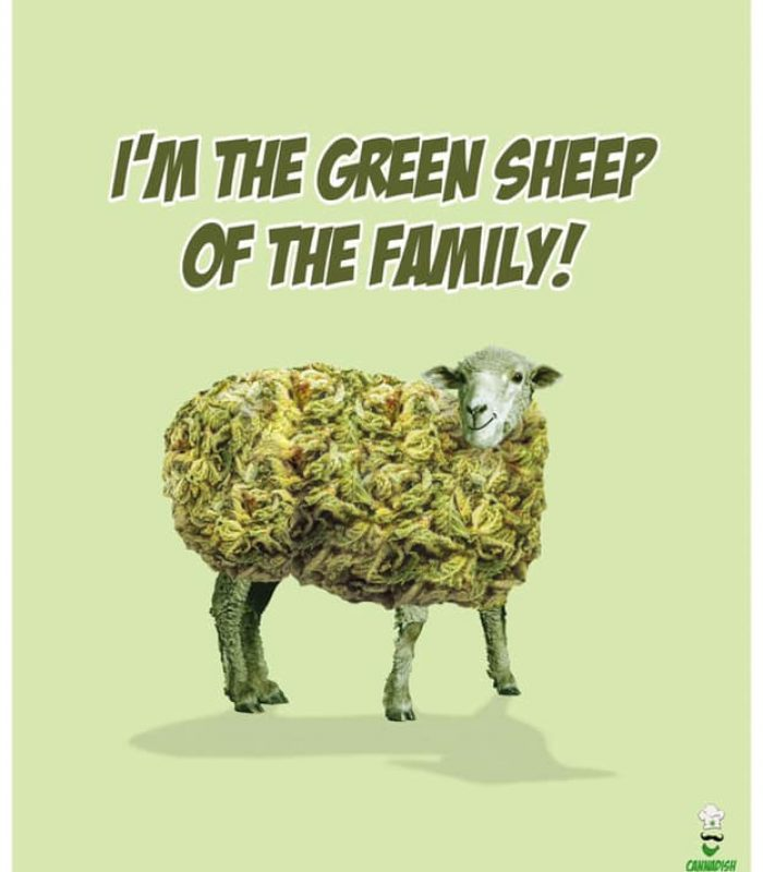 "Being The ""Green Sheep"" Of The Family Can Be Hard"