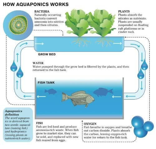 aquaponics grow cycle