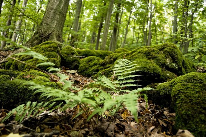 do plants feel pain is a question you mgiht think of looking at these plants in a forest