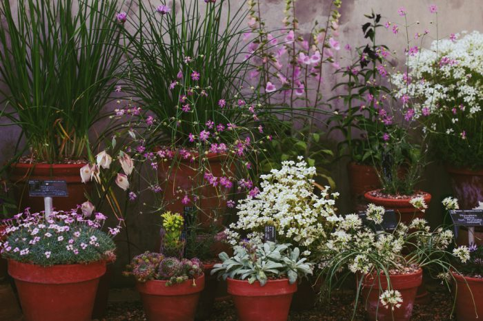 do plants feel pain is a question you mgiht think of looking at these potted plants in a conservatory