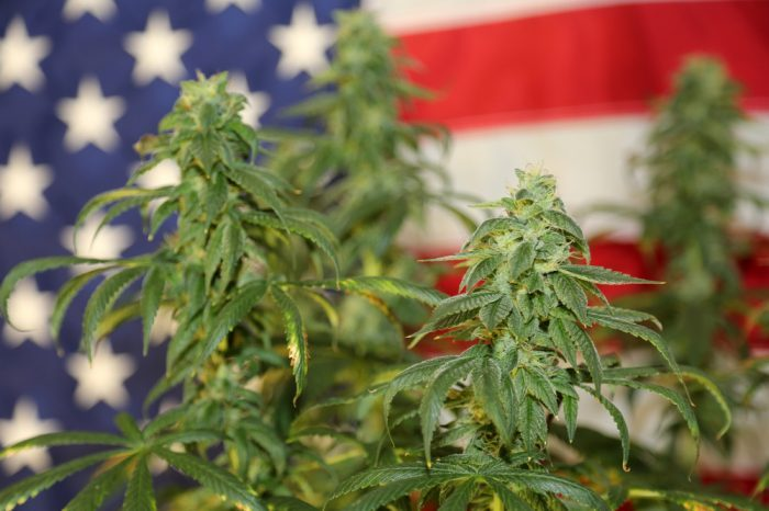 will america legalize cannabis is a question involving this cannabis plant in front of an american flag