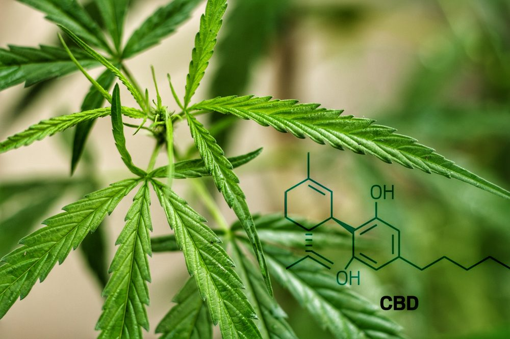 cbd which this study shows helpe cognitive impairment