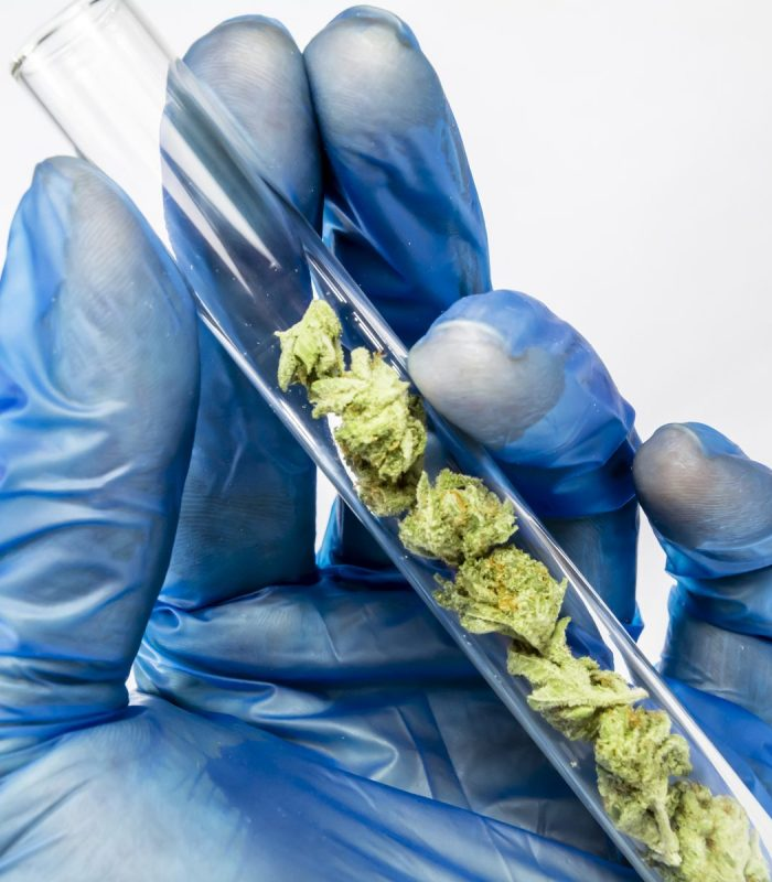 """""""Father Of Cannabis"""" Makes Synthetic Drugs For Big Pharma"""