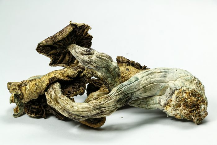 types of mushrooms like this one will soon be in medicinal use