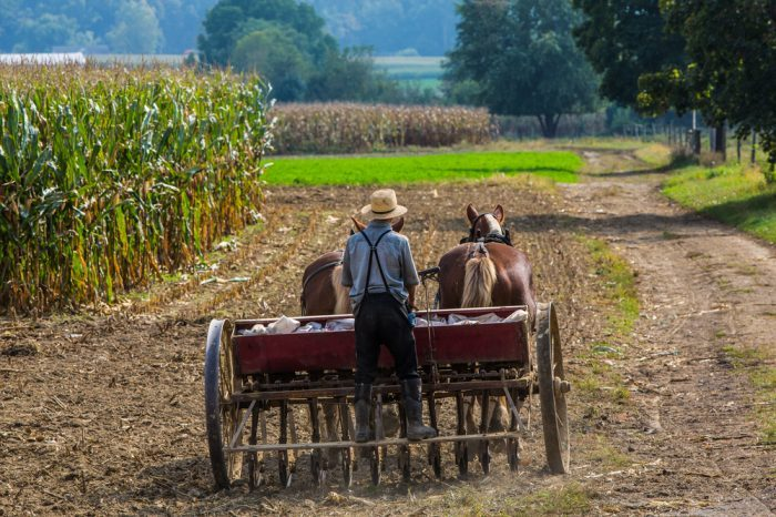 Amish Farmers Are Leaving Tobacco For Hemp