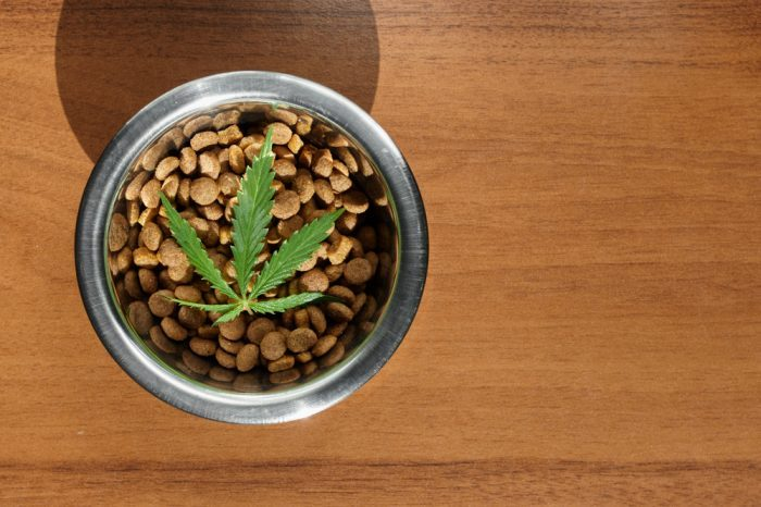 how much cbd for dogs represented by kibble bowl with cannabis leaf sitting on top