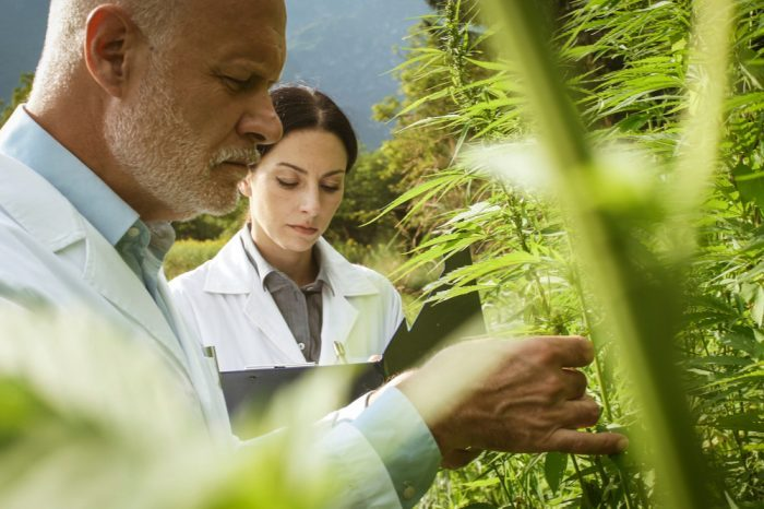 Hemp is Bad? Legalized Hemp Might Not be the Miracle We Needed