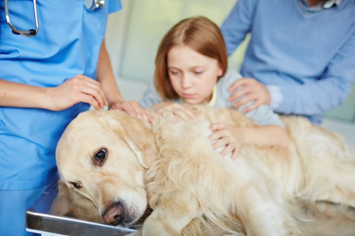Will CBD Work to Calm an Anxious Dog?