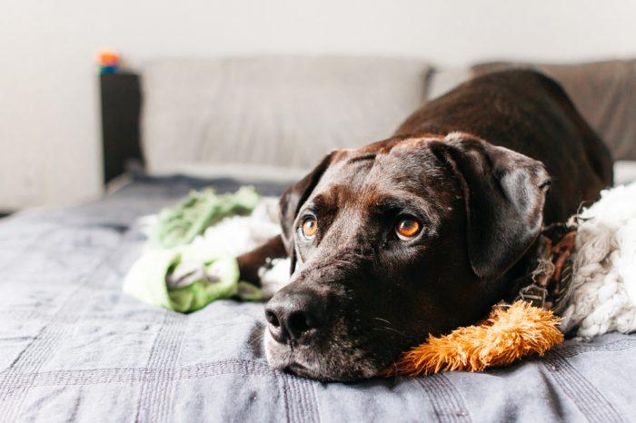 HOW TO CALM AN ANXIOUS DOG as a dog cuddles a stuffed animal