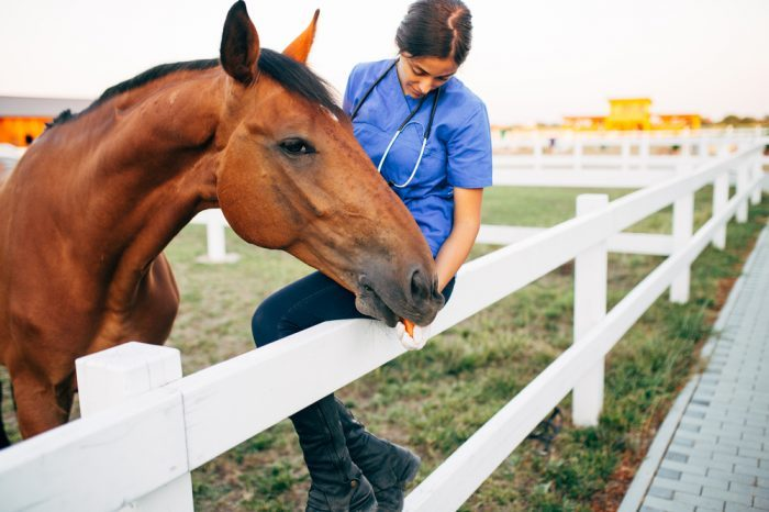 Cannabis for Horses? The Latest Research on Equine Cannabis Medicine