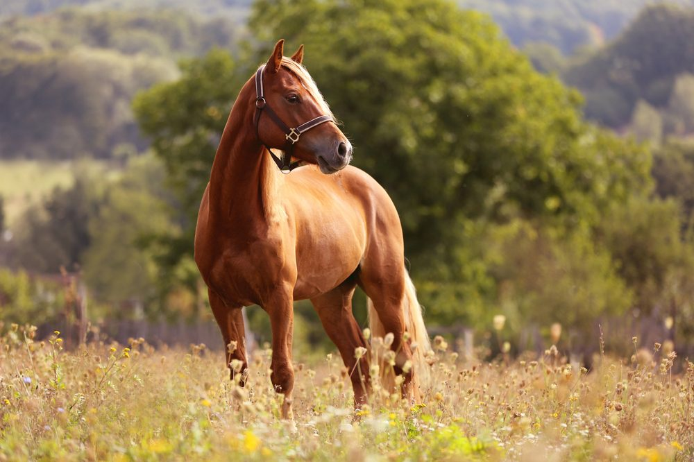 cannabis for horses and their health like this brown mare in a sunny field