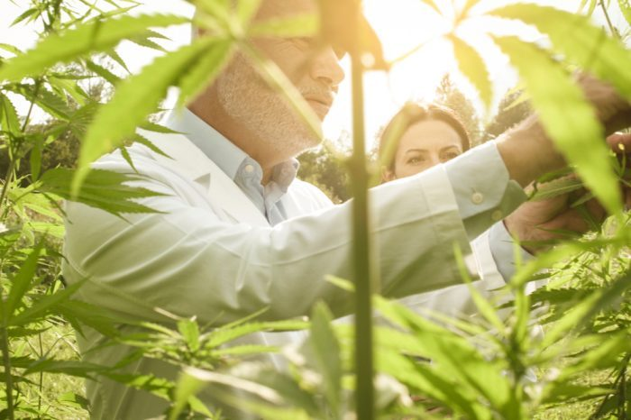Is Quality Control in Cannabis Happening?