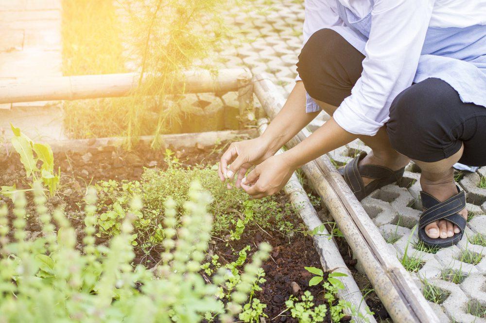 Herb Garden Ideas to Really Boost Your Cannabis Grow