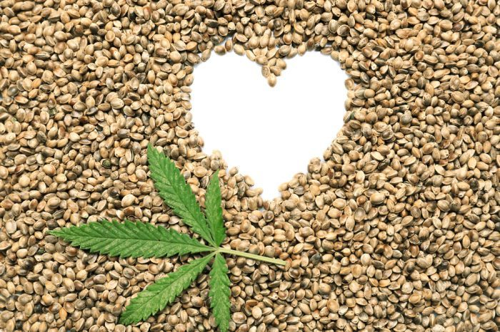 CANNABIS AND BLOOD PRESSURE represented by hemp hearts in heart