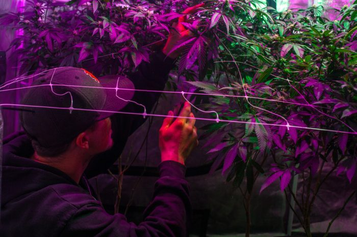 Everything You Need to Know: Carbon Filters for Your Indoor Grow