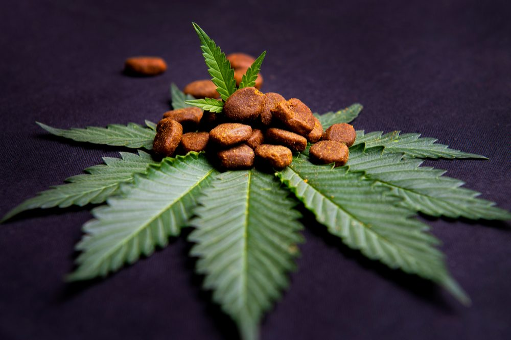 dog treats with cannabis oil represented by dog treats on cannabis leaves