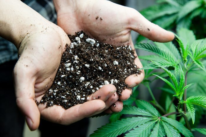 Use Companion Plants for the Best Cannabis Grow and Healing Garden