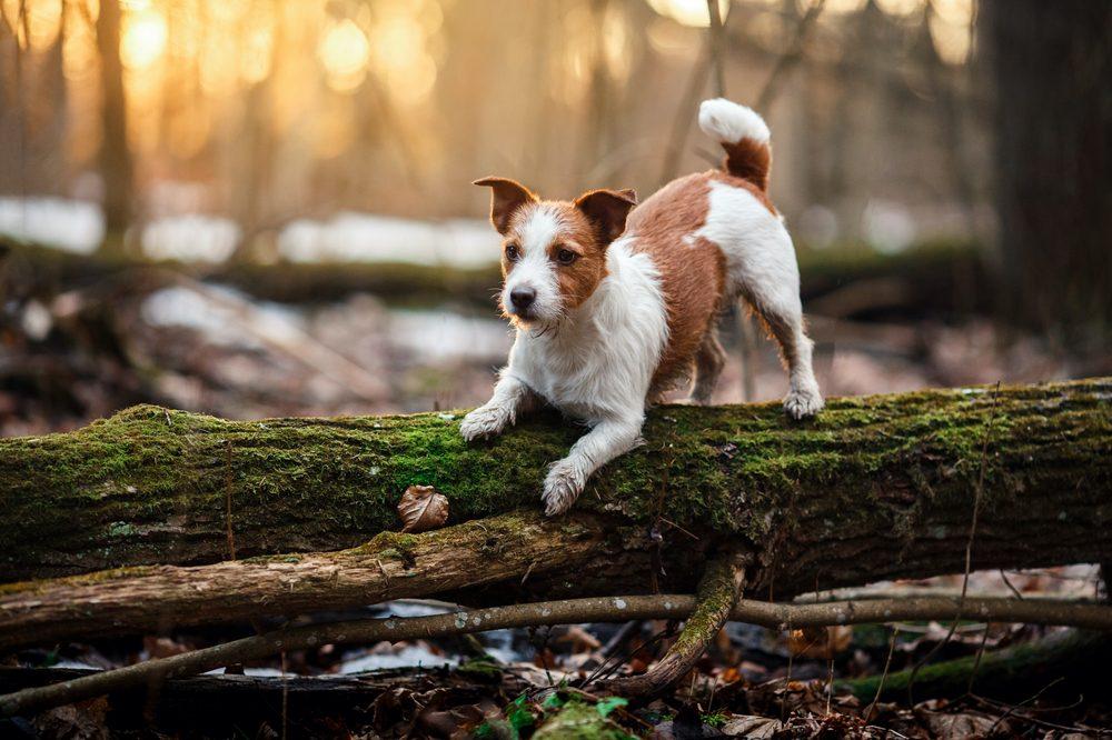Beware of False Advertising When Buying Hemp CBD for Pets