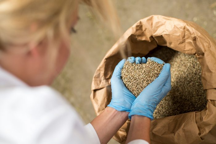Are Hemp Hearts the Secret Elixir of Youth?