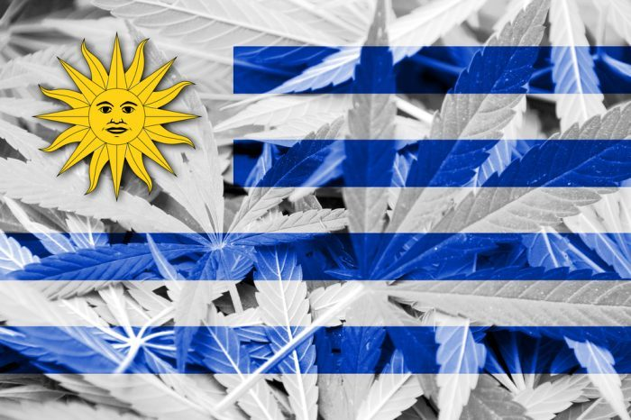 rights for cannabis patients worldwide represented by flag of uruguay over cannabis leaves