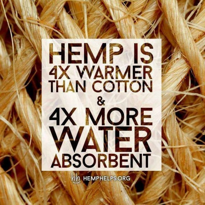 Hemp Versus Cotton: Which One is Best for The Environment and the Economy?