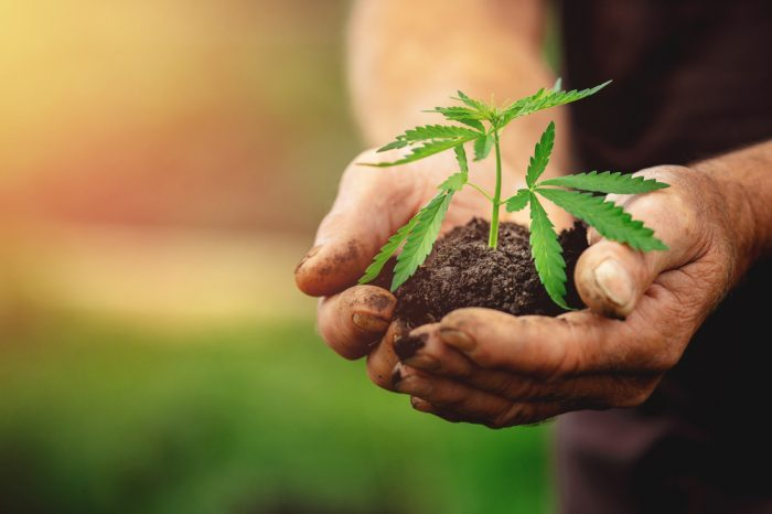 Tricks to Making the Most of Growing Cannabis Outdoors
