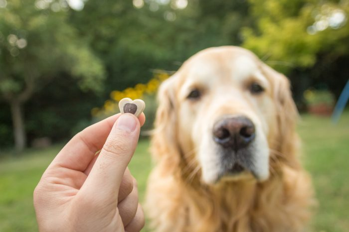 cbd treats for dogs represented by person holding out treat for happy golden retriever dog