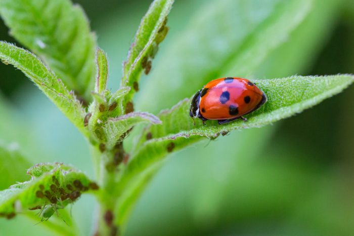 Cannabis Grow Problems Caused by Nasty Pests and How to Kill Them Fast