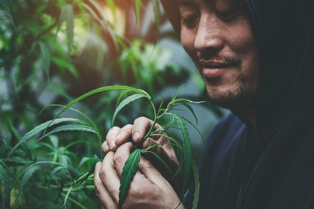 fasting and cannabis represented by asian man fondly looking at cannabis plant