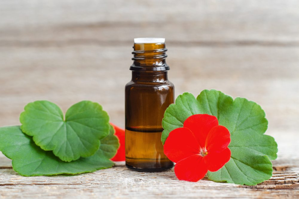 geraniol oil in bottle, near geranium leaves