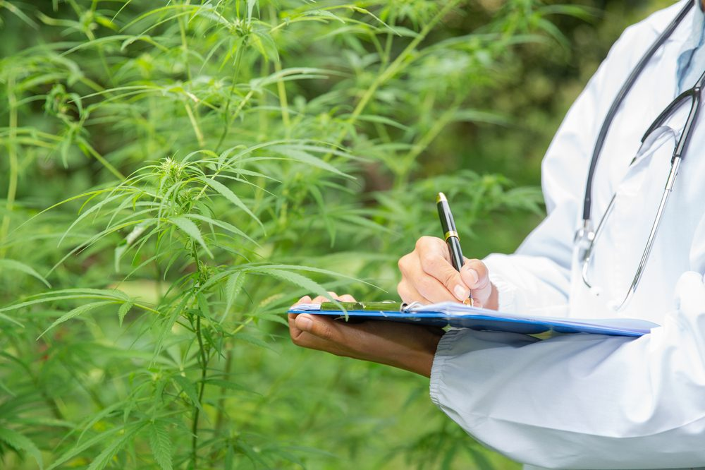 A person with a clip board tests looks hemp plants. Growing hemp for CBD could soon be a profitable business