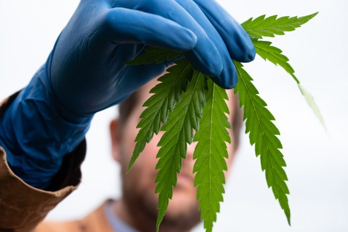 Police in America Being Trained on How to Identify a Hemp Plant