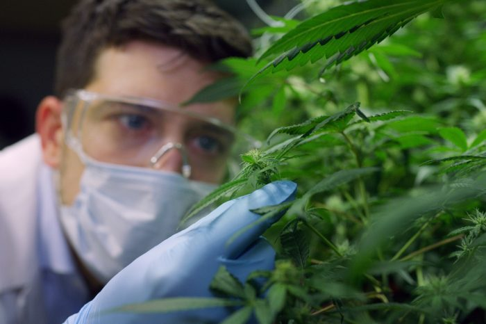 Is Pharmaceutical CBD More Effective Than Herb?