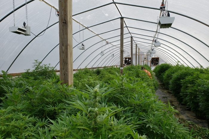 this large grow tent is where one would not find pharmaceutical cbd